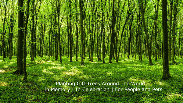 The Gifted Tree | Planting Gift Trees Worldwide